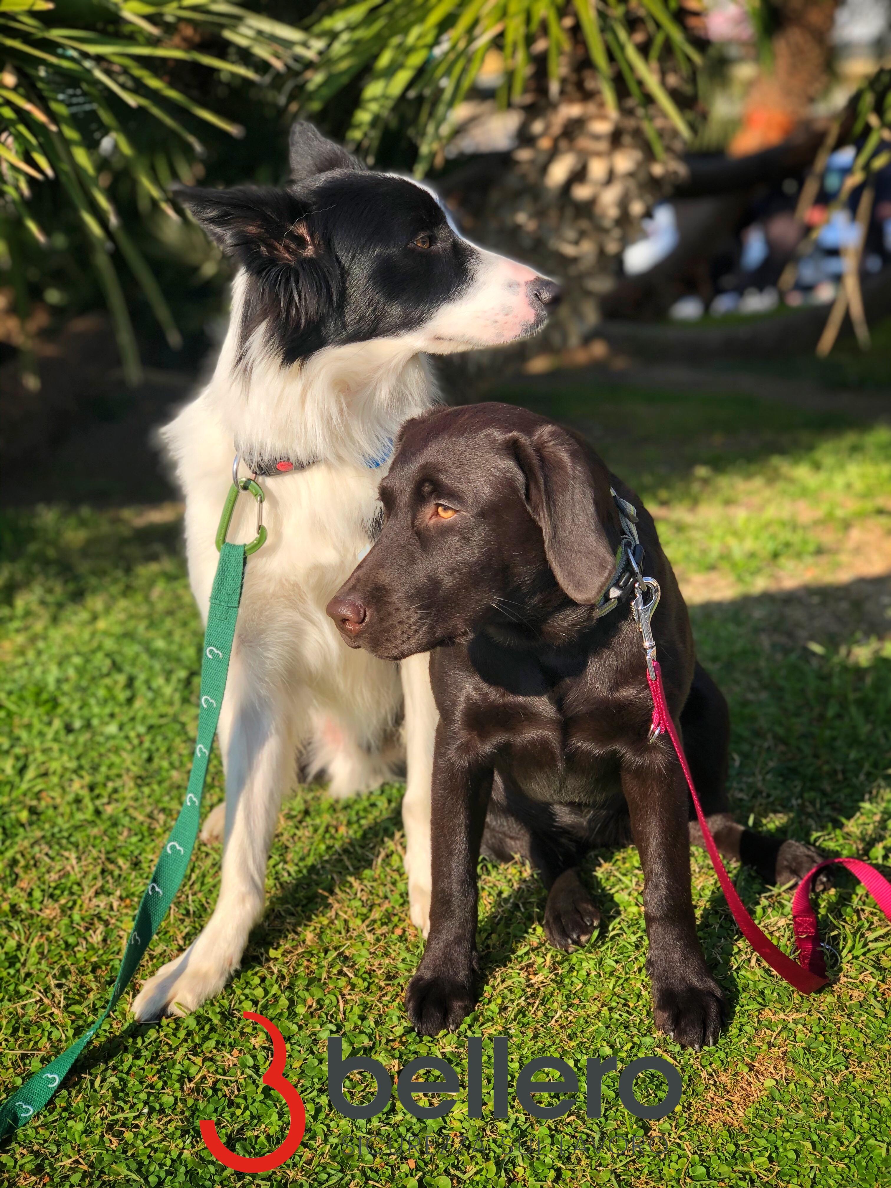 Nuove misure di prevenzione dei rischi, grazie ai cani